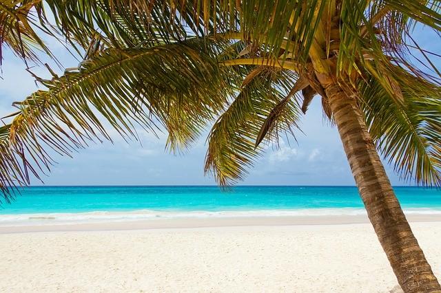 Palme ohne Schlager (Symbolbild), Quelle: pixabay